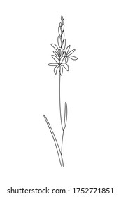 Camassia or wild hyacinth flower in continuous line art drawing style. Minimalist black linear sketch isolated on white background. Vector illustration