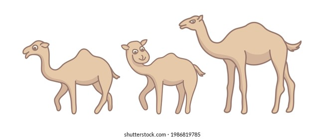 camel cute character, flat style set collection vector cartoon design graphic