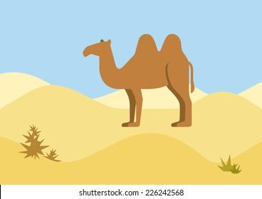 Camel desert habitat background flat design cartoon vector wild animals. Flat zoo nature children collection.