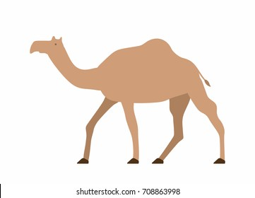 Camel in flat style on white background