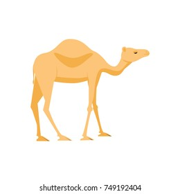 Camel icon. Stock vector illustration of a mammal animal in flat style isolated on white background.