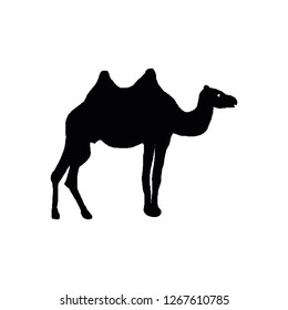 Camel icon vector symbol isolated. Vector illustration. Vector icon illustration isolated on white background.