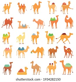 Camel icons set. Cartoon set of camel vector icons for web design