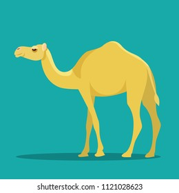 Camel isolated. Vector flat style illustration