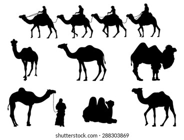Camel Silhouettes. Vector Image