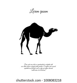 Camel. Vector icon