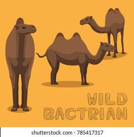 Camel Wild Bactrian Cartoon Vector Illustration