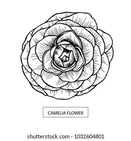 Camelia flower hand drawn, black isolated on white background. Vector illustration. Eps10