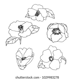 Camelia outline vector. Vector illustration of flower Camellia on white background. Hand drawing. Monochrome vector set of camelias.