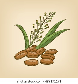 Camelina sativa or gold-of-pleasure, or false flax, flowering oil plant. Vector illustration. Hand drawn illustration.