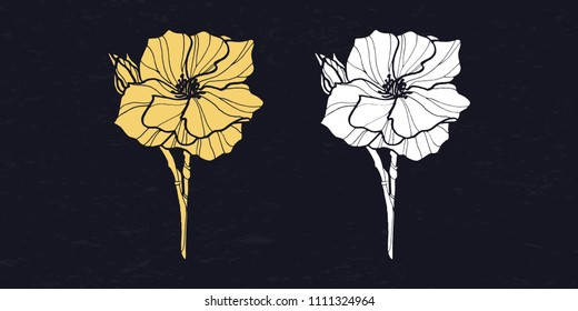 Camellia hand drawn vector. Engraved style illustration. Graphical set of hand-drawn camellia flower. isolated on black.vector EPS10. flower drawing and sketch with black, yellow and white line-art.