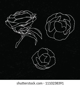 Camellia outline vector. Monochrome vector set of camellia flower. Set of vector silhouettes of hand drawn flowers isolated on black background. Hand drawing flowers. Template greeting card, wedding