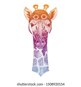 Camelopard, giraffe wearing vintage aviator leather helmet. Image in retro style. Flying club or motorcycle biker emblem. Vector illustration, print for tee shirt, badge logo patch