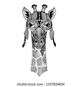 Camelopard, giraffe Wild animal wearing motorcycle, aero helmet. Biker illustration for t-shirt, posters, prints.