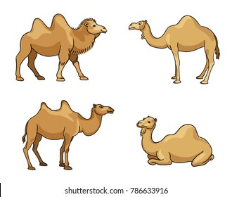 Camels in cartoon style - vector illustration. EPS8