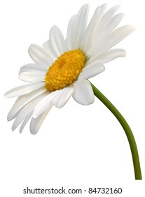 camomile flower isolated on white