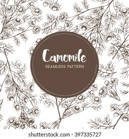 Camomile. Vector seamless pattern of medicinal herbs.