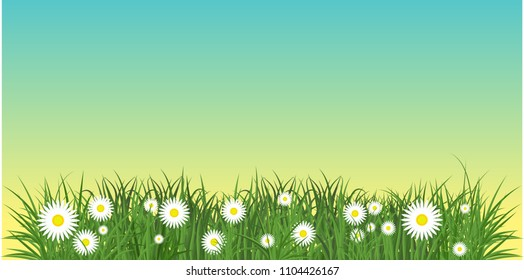 Camomiles and a green grass with blue sky bottom border. Template for summer cards for birthday and holidays. Flat vector cartoon illustration. Objects isolated on a white background.