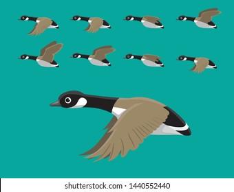 Canada Geese Flying Animation Sequence Cartoon Vector