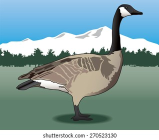 Canada goose standing in field with trees and mountains in background
