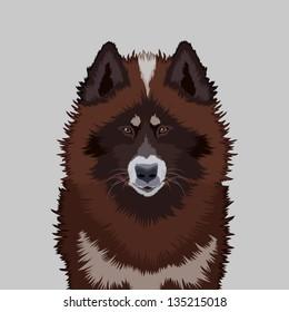 Canadian eskimo dog, The buddy dog