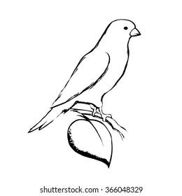 canary bird vector