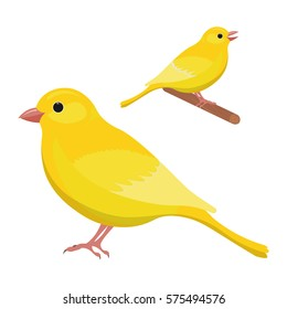 Canary bird vector illustration Isolated on a white background