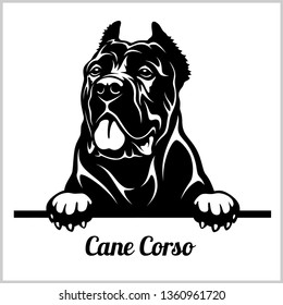 Cane Corso - Peeking Dogs - breed face head isolated on white - vector stock