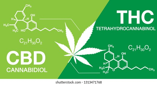 Cannabidiol (CBD) cannabis molecule and Tetrahydrocannabinol (THC) cannabis molecule. Green color design for cannabis or hemp or marijuana chemical formula.