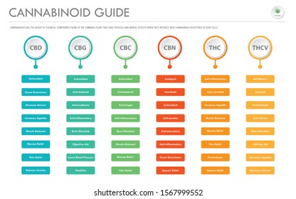 Cannabinoid Guide horizontal business infographic illustration about cannabis as herbal alternative medicine and chemical therapy, healthcare and medical science vector.