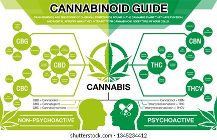 Cannabinoid Guide infographic chart. show main compound cannabinoid from cannabis, hemp, marijuana or marihuana.Green concept vector design on white background.