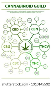 Cannabinoid guide infographic, healthcare and medical illustration about cannabis