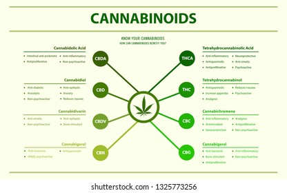 Cannabinoids Benefits You horizontal infographic illustration about cannabis as herbal alternative medicine and chemical therapy, healthcare and medical science vector.