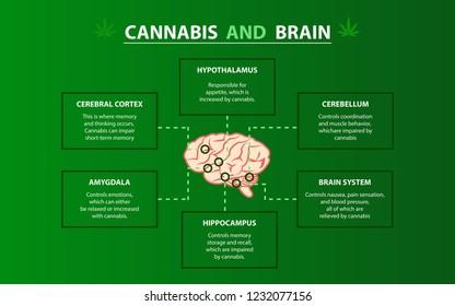 Cannabis and Brain, Cannabis, hemp, marijuana effect each part of brain, Cerebral Cortex, Amygdala, Hypothalamus, Hippocampus, Cerebellum, Brain system