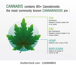 cannabis contains 85+ cannabinoids the most commonly known cannabinoids,vector infographic on white background.