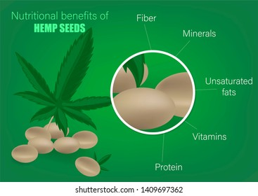 Cannabis hemp seed nutrient of facts and health benefits. Nutritional benefits of hemp seeds. Useful components of marijuana. Fiber, minerals, unsaturated fats, vitamins, protein.