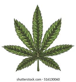 Cannabis leaf. Hand drawn isolated illustration.