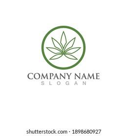 cannabis leaf nature logo vector