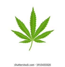 Cannabis leaf vector illustration,Herbal medicine herb plant