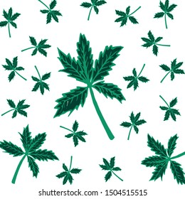 Cannabis leaves background texture and hand drawn,Fall and Autumn season.