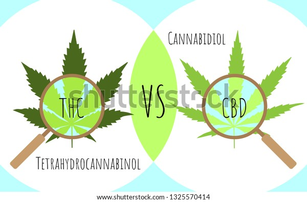 cannabis-leaves-through-magnifying-glass-600w-1325570414