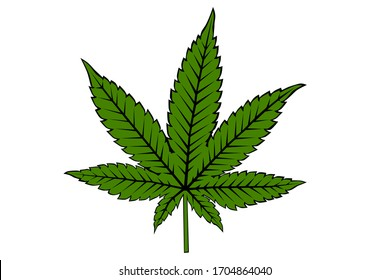Cannabis Marijuana Leaf on White Background Vector Illustration