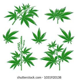 Cannabis, marijuana set. Vector