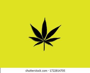 cannabis on yellow background, 7 leaf cannabis, cannabis