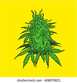 Cannabis plant with leaves and buds. Hand drawn design.