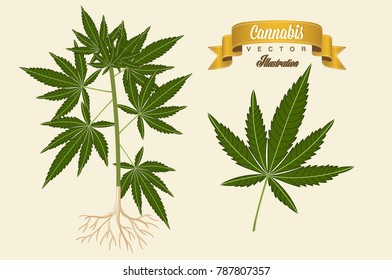 Cannabis plant vector illustration. Marijuana plant.