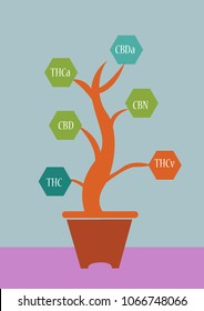 Cannabis plant which Cannabinoids is taken and called Designer Drugs which is now illegal throughout much of the world. Editable Clip Art.