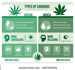Cannabis sativa and cannabis indica: differencies and health benefits infographic
