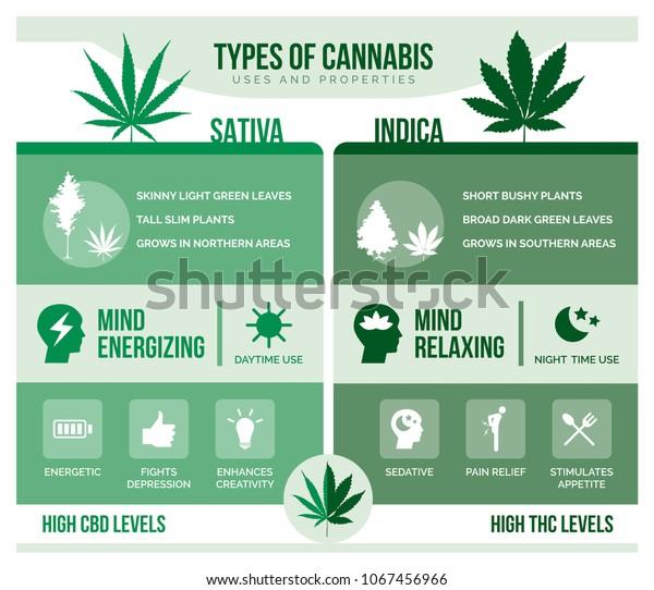 Cannabis Sativa Y Cannabis Indica Diferencias Y Beneficios Para La Salud Infográficos