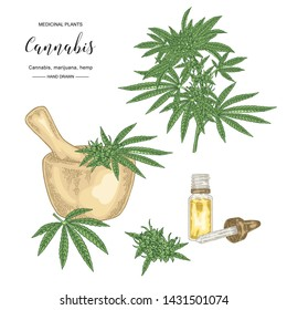 Cannabis sativa or cannabis indica plant. Marijuana leaves and seeds. Medical and cosmetic herbs. Botanical vector illustration.